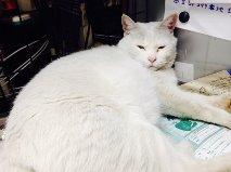 フレッツカンパニー白猫ちゃん