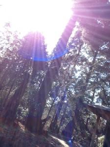 旅(るり宅、東長寺、幣立神社) 043.jpg位置調整済み