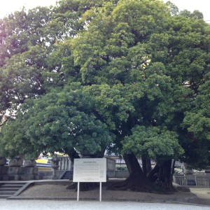 東長寺  寺院内の大きな木